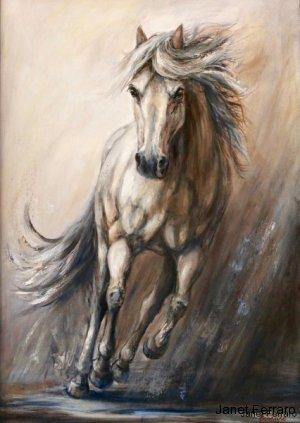 Gallop ll