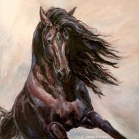 Equine Elation II