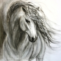 Equine Sublime